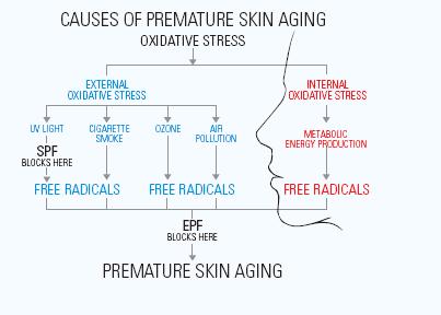 Skin Aging